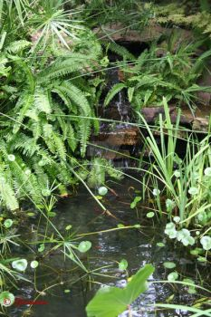 Koi Pond and Water Garden by CreoleTownhouse
