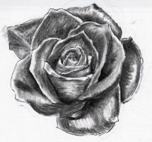 Rose for tattoo design by Drewnique