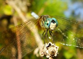 Colorful Blue Dasher by Fail-Avenger