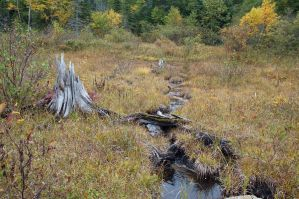 Stump and stream by LucieG-Stock