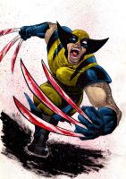 wolverine. by midknight23