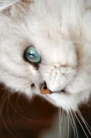 My other cat by Fohat