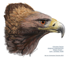 Golden Eagle - quick bust sketch by LeccathuFurvicael
