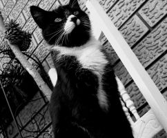 The cat in charge by RainaAstaldo