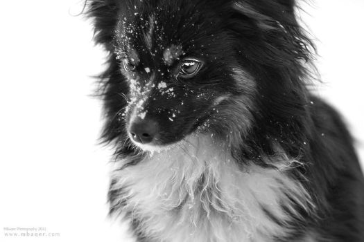 Snow Dog by MBaqerstyle