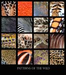 Patterns of the Wild by PunkatHeart