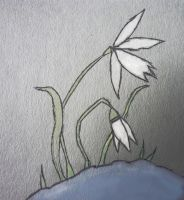 Two snowdrops by mimiMatelot