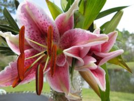 Lily for Easter by Heidipickels