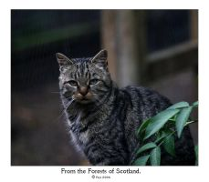 From the Forests of Scotland. by FSGPhotography
