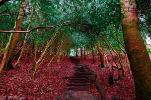 Forest Staircase by Horroromance