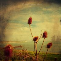 thistle in Newhaven by nnoik
