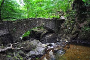 Woodland Bridge by Forestina-Fotos