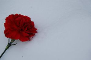 Red on White by invisibleperson0o