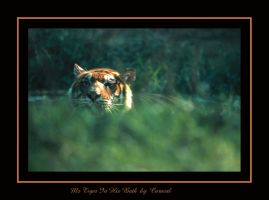 Mr Tiger In His Bath by caracal