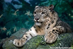 Snow Leopard II by amrodel