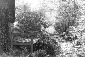 The Garden Bench by Nat-photography