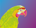 Macaw Pop Art Portrait by Hannah-Needle