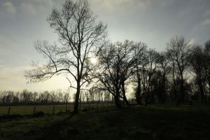 Black Woods And Fields by FiLH