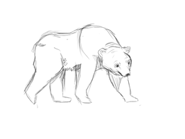 Dat Bear Sketch by Stressed-Panda