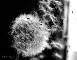 Gone with the Wind by MyLifeThroughTheLens
