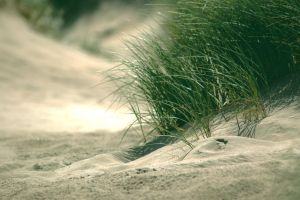 Marram HDR by 1Mathew7