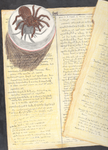 Old Art: Spider and Pages by Daemonologist