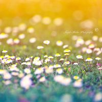 lay your head here by SaphoPhotographics