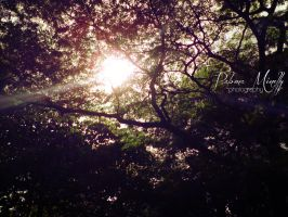 Sunlight on trees by PMinelly