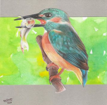 Kingfisher for Dad by Inushi