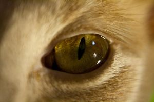 Cat Eye Stock 2 by Lizzie-Bitty