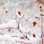 Frost on the branches by Tori-Tolkacheva
