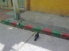 Pigeon in the street by G3Drakoheart-Arts
