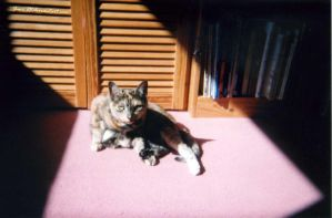 Sunlit Wash (Film Gone Wrong!) by Jane-Rt