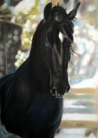 The Black Horse by Supernaturalgirlx