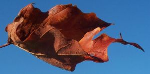 Fall Leaf 2 STOCK by Penny-Stock