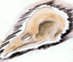 Crow Skull by trigs94