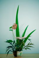 Ikebana with Elder and Rushes by tiganusi