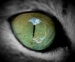 Cat's Eye 3 by Anntylus