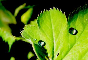 two little drops... by ah-fotografie-me