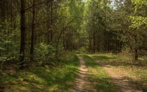 Yet another forest trail by Isyala