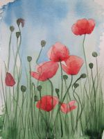 Poppies by Sokoke00500