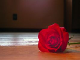 Rose on the floor in water by estesgraphics