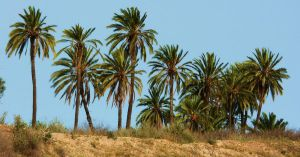 Palm trees by MiDulceLocura