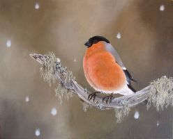 .:: Lonely Bullfinch ::. by Maiwenn