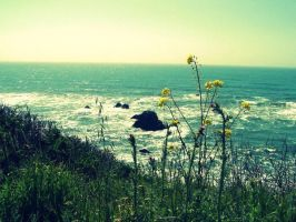 California Tint by gwendolyn-claire