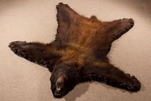 Bear rug by CreatureUndertaker
