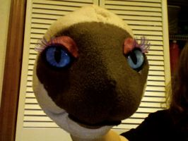 cat puppet:withot earsnose etc by MomIsMean