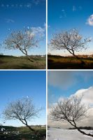 The four seasons of the paper by henlor