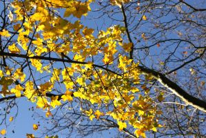 Autumn impressions by Budeltier