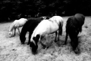 Dark horses by nectar666